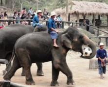 Eco-Adventures in Thailand's North